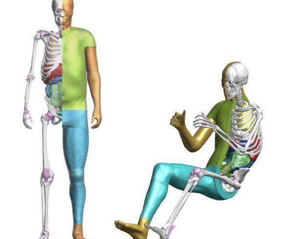 โตโยต้า เปิดซอฟต์แวร์ THUMS เทคโนโลยีจำลองร่างกายมนุษย์แบบเสมือนจริงให้ใช้ได้ฟรี